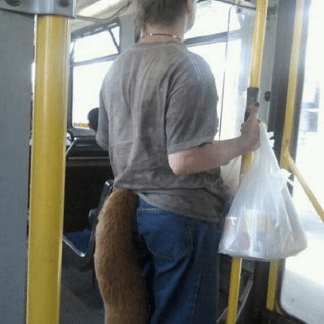 fox on subway