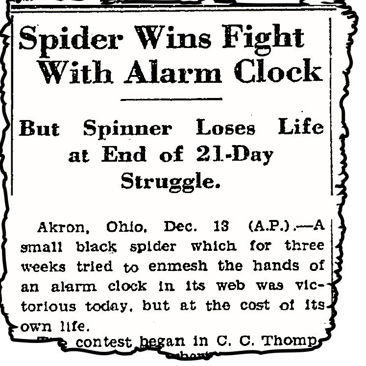 The Spider That Waged A Battle Against A Clock