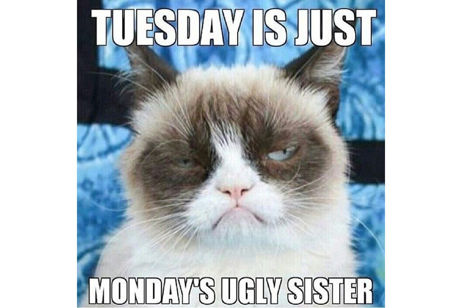 Grump Cat commenting on Tuesdays meme