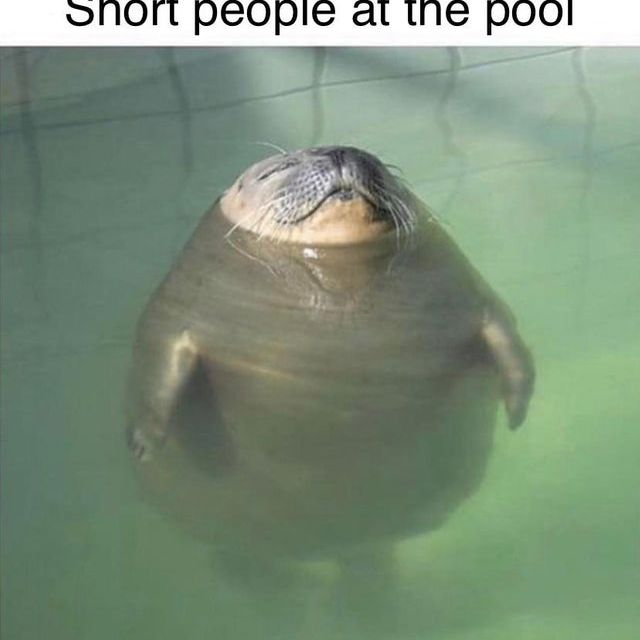 short seal trying to keep his head above water
