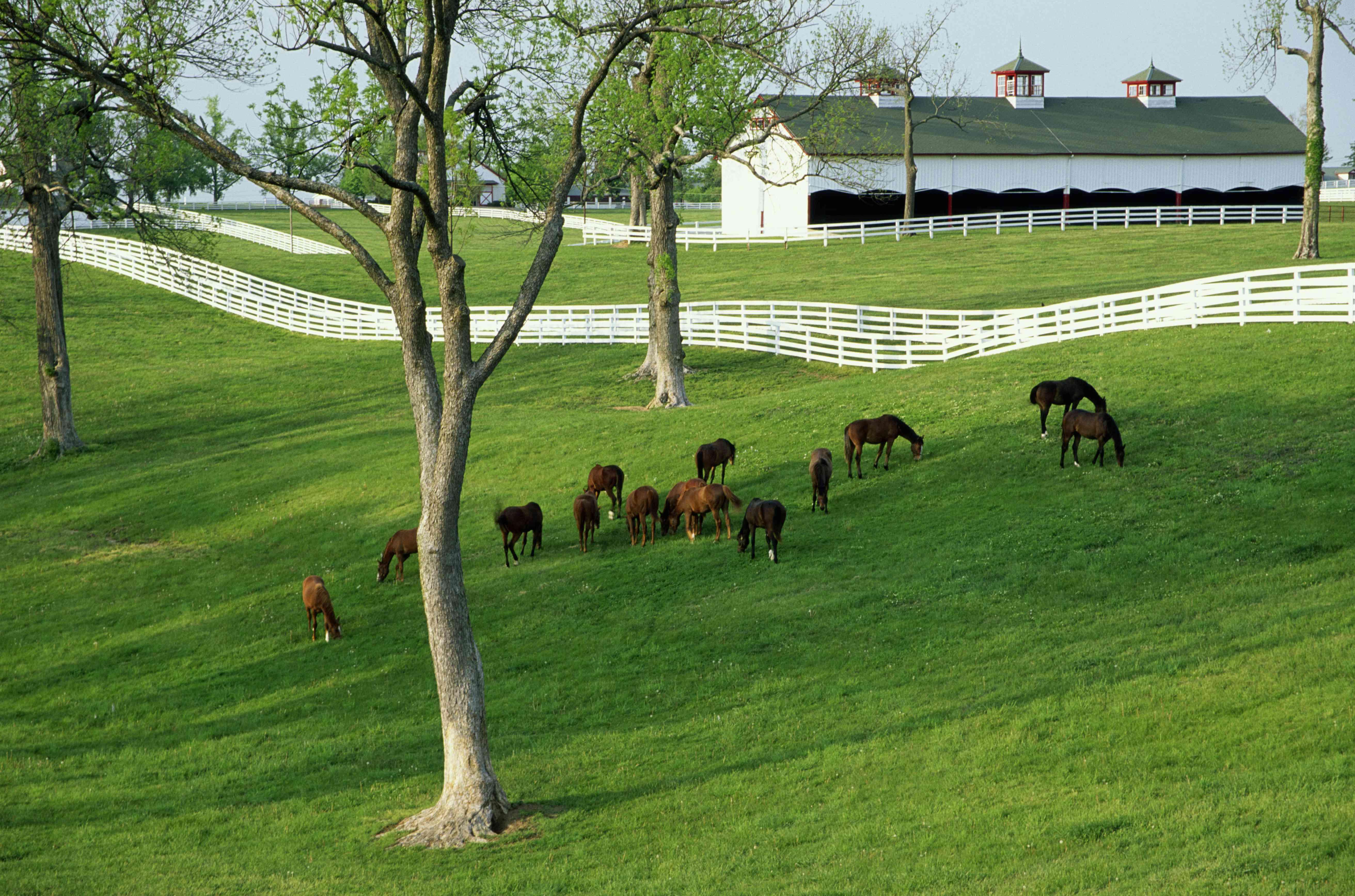 USA, Kentucky, horse farm