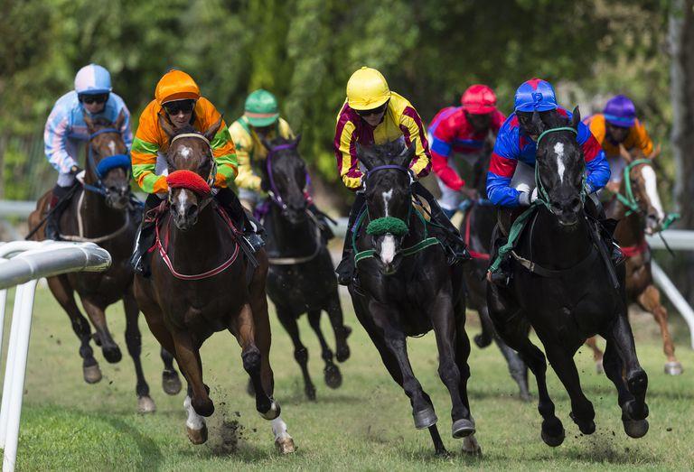 Horse race towards viewer