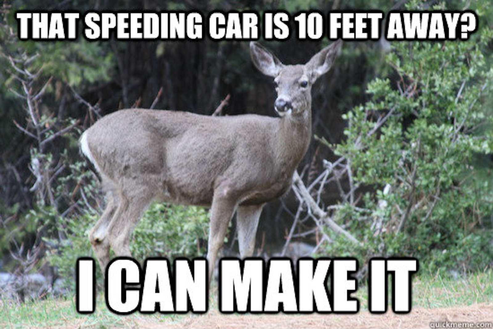 Deer Meme