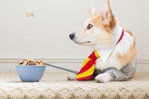 Dog wearing Harry Potter tie