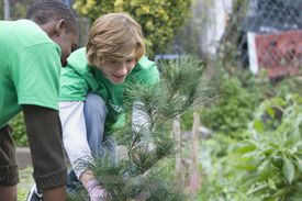 Teen volunteers planting a tree together in New York