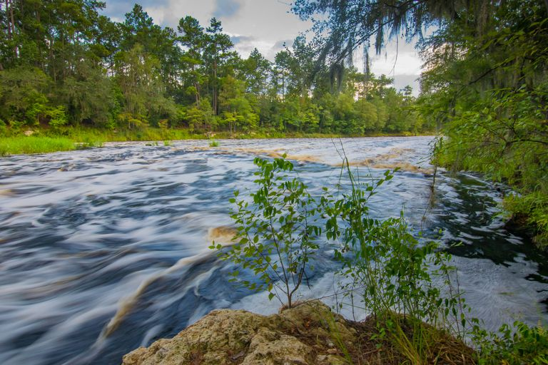 Whitewater Rapids at Big Shoals on Suwannee River in Florida