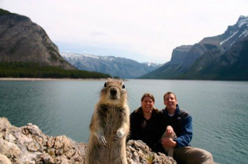 Top 15 Funny Famous Animal Photobombs on the Internet