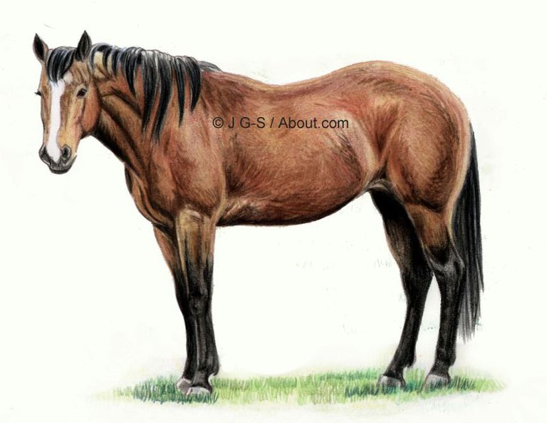horse drawing 6 56a26db03df78cf 5c6a e0fb0001f0e489