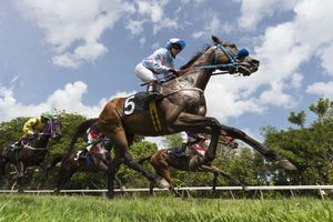 Ground level view of a horse race on a turf track on a sunny day.