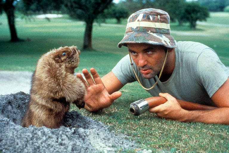 Bill Murray, the gopher and burrowing animal holes