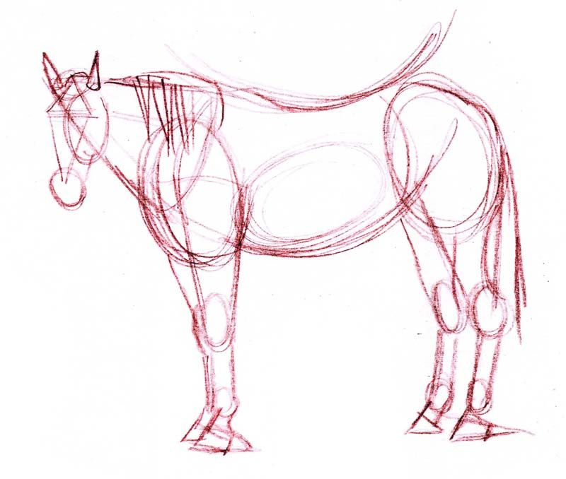 the basic structural sketch of the horse drawing