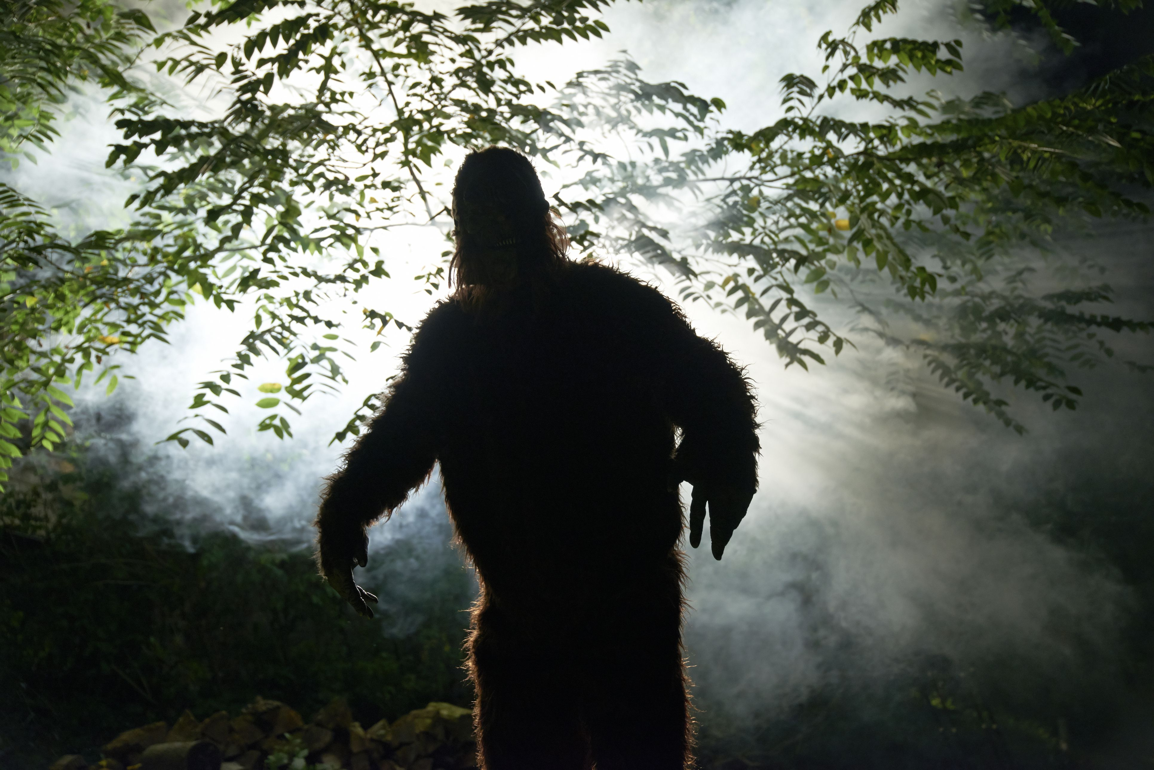 Is there a Bigfoot living in East Texas?