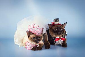 Cat Wedding