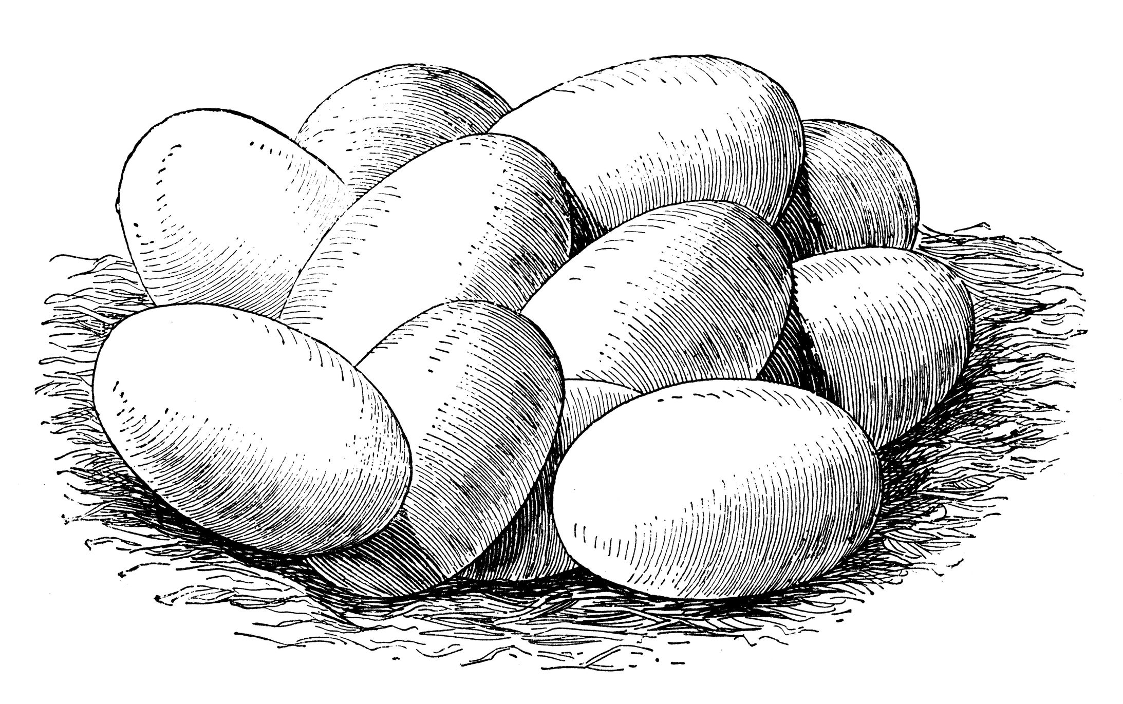 drawing of a group of snake eggs