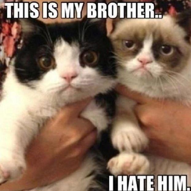 Grumpy Cat Hates Pokey