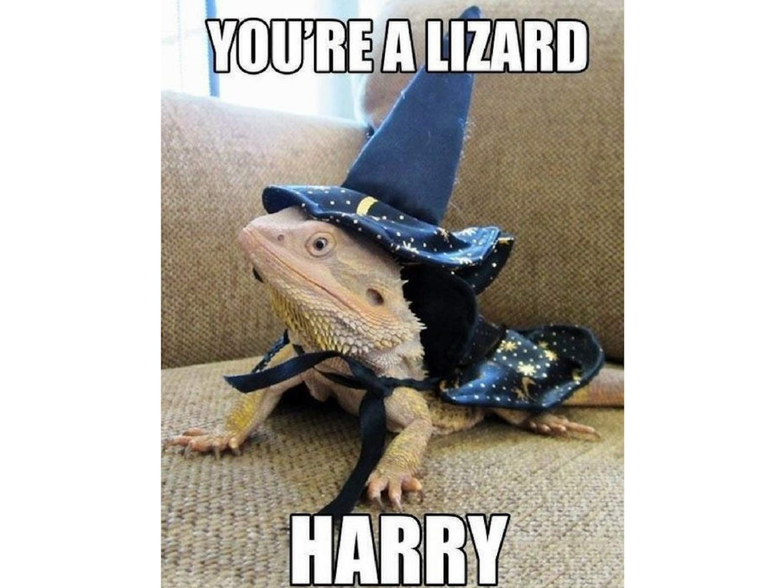 Lizard Meme
