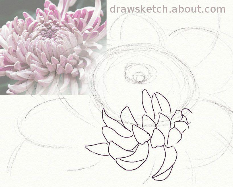 chrysanthemum1 56a26d0d3df78cf
