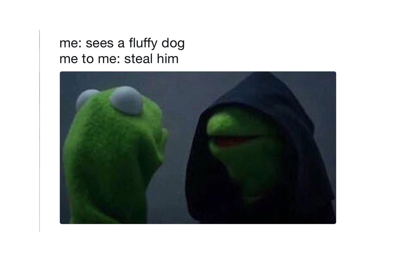 Evil Kermit: Steal him.