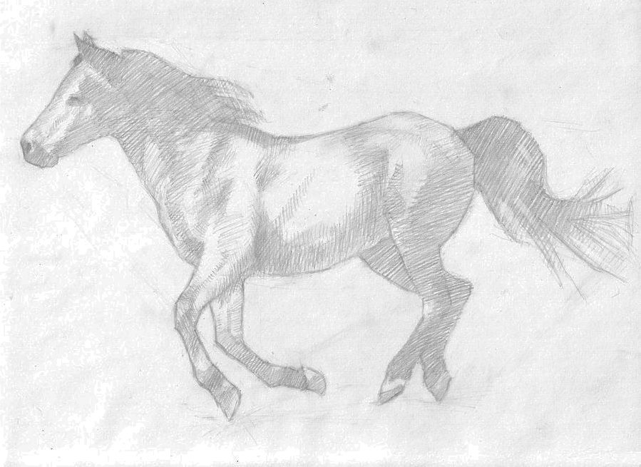 horse sketch - developing values