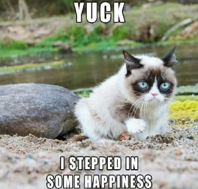 Grumpy Cat Has Stepped in Something Gross