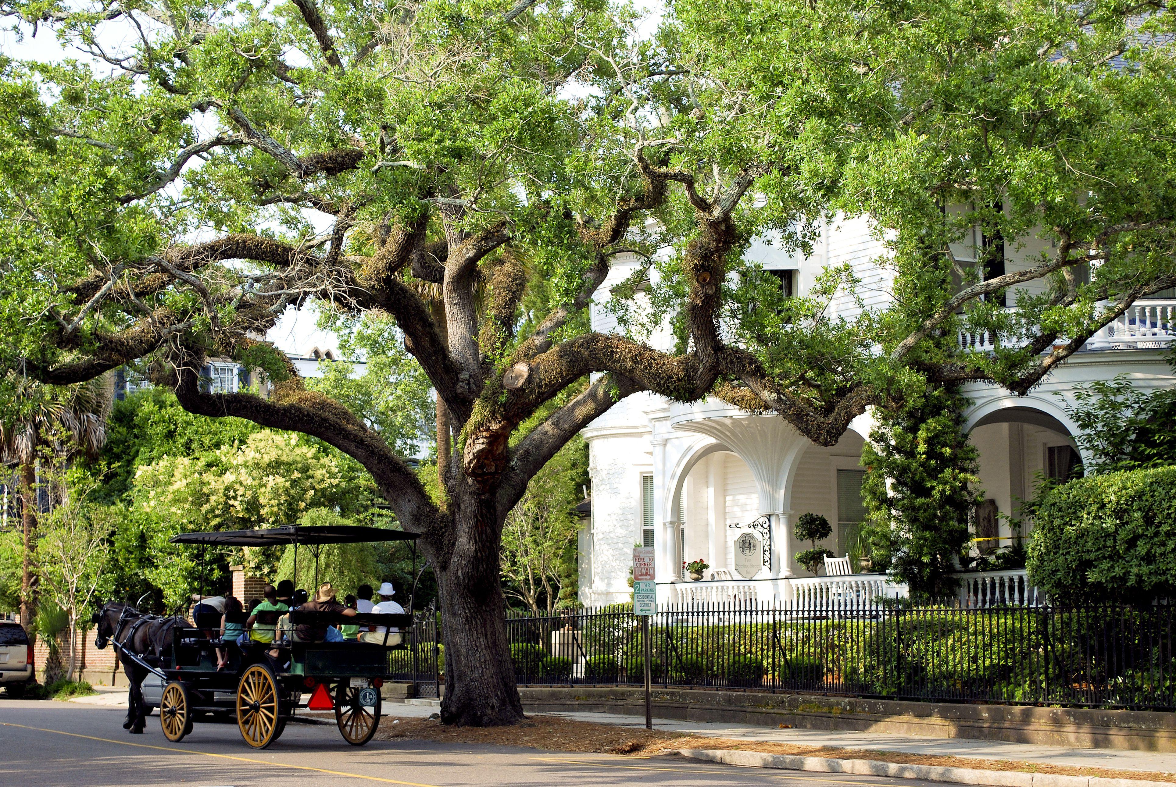 Historic Carriage Ride, Charleston, South Carolina