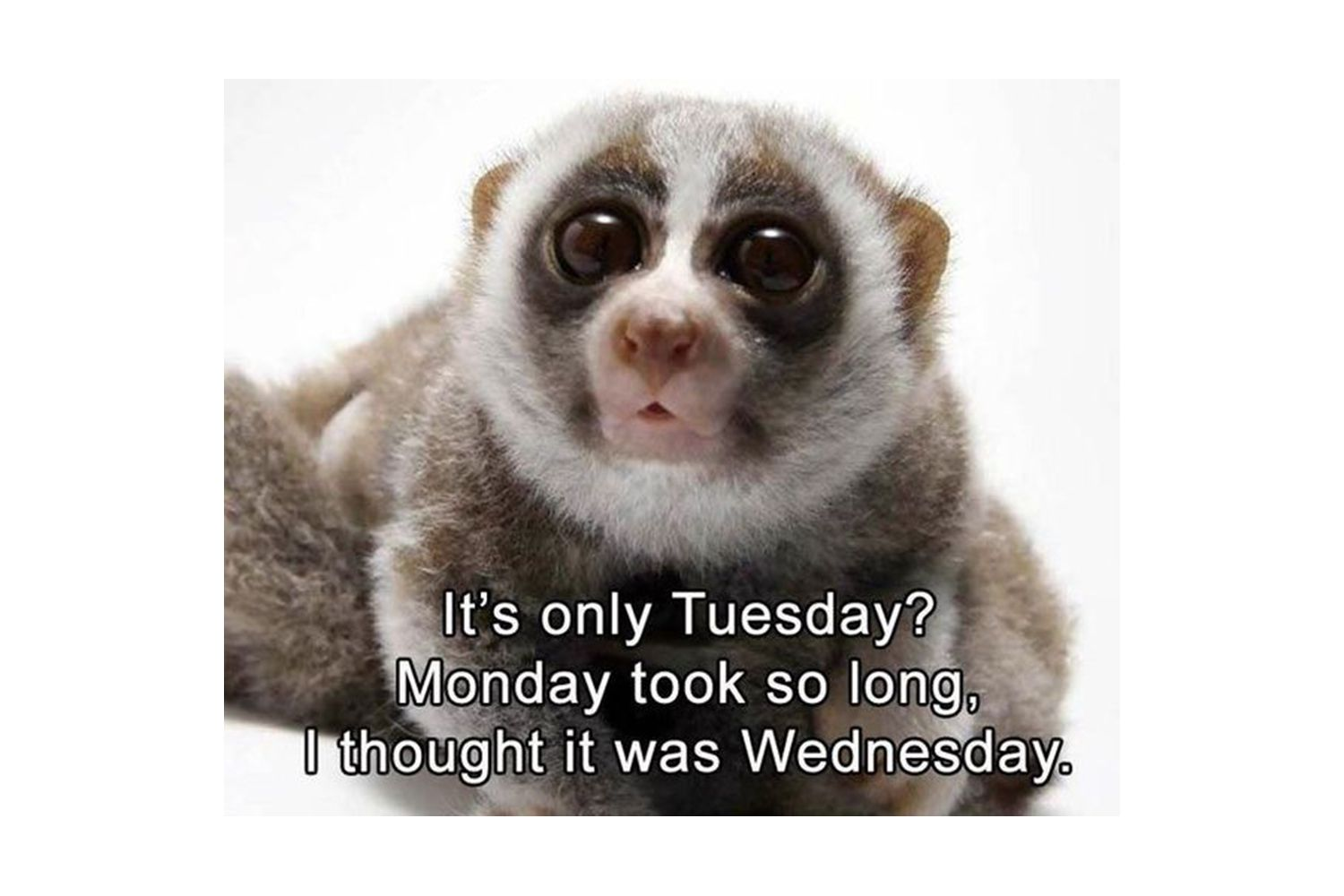 Monday took to long