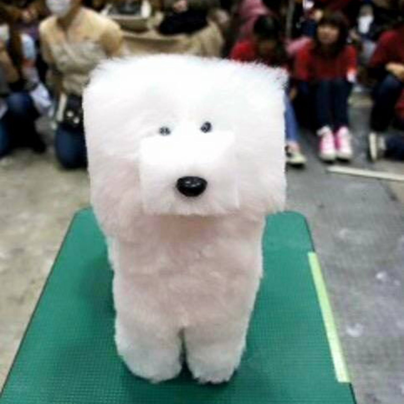 Dog with square haircut