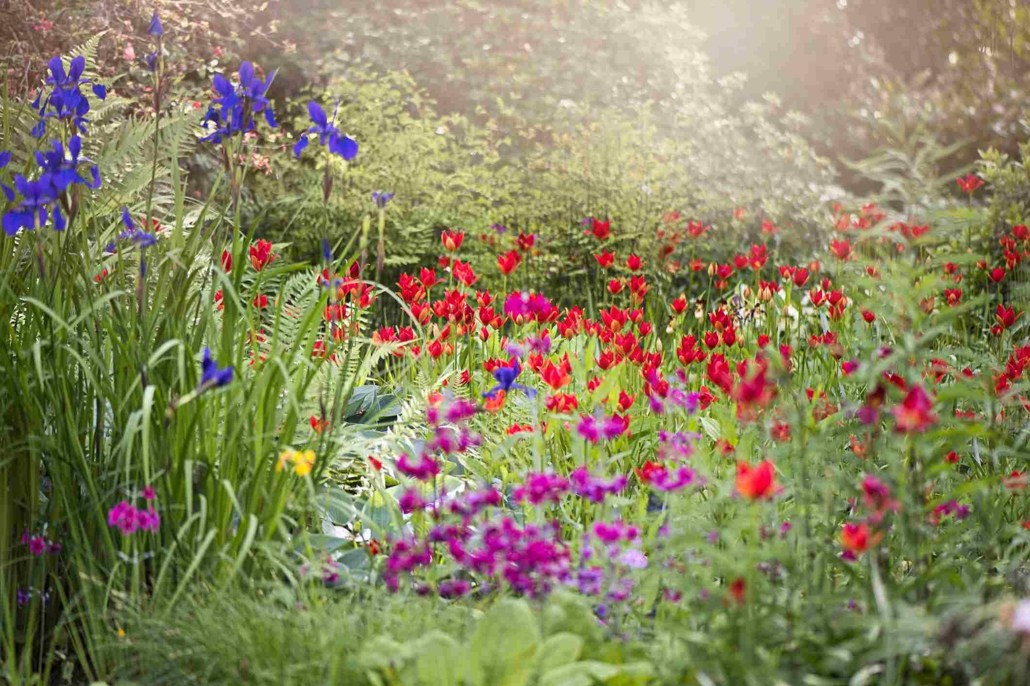 Densely-Planted Garden