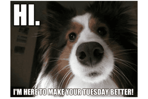 I'm here to make Tuesday Better meme