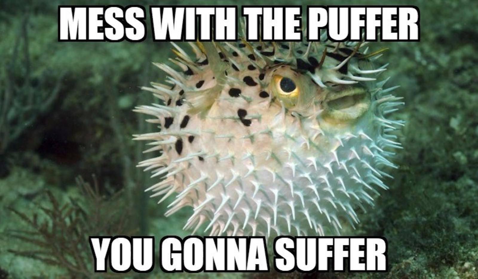 Pufferfish Meme