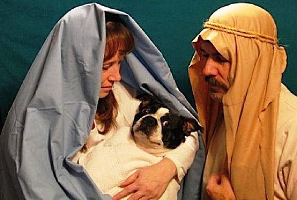 funny-christmas-cards-virgin-dog-birth.jpg