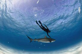 Freediver and Tiger Shark