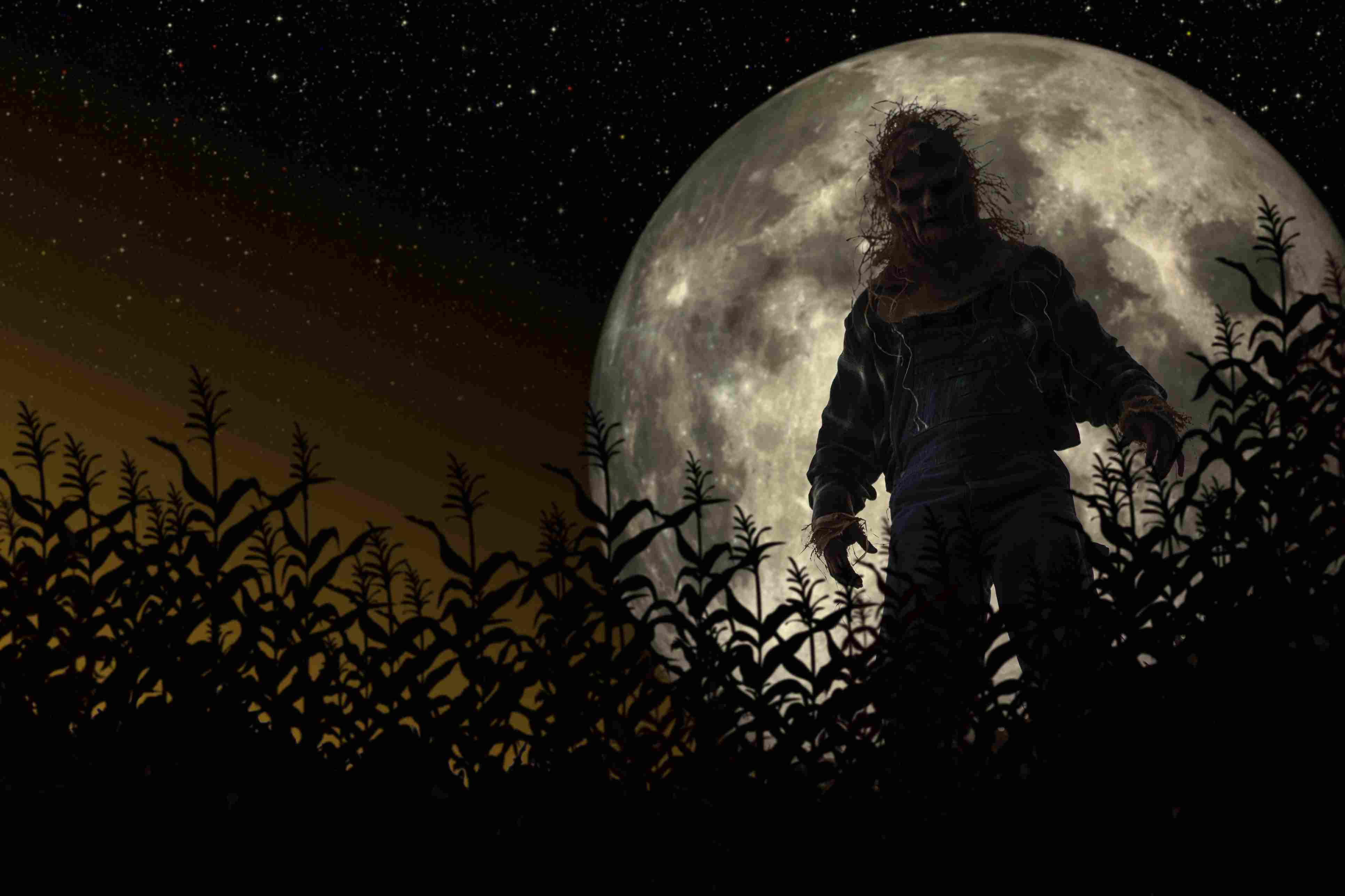 Frank saw a creature he could not identify in a cornfield.