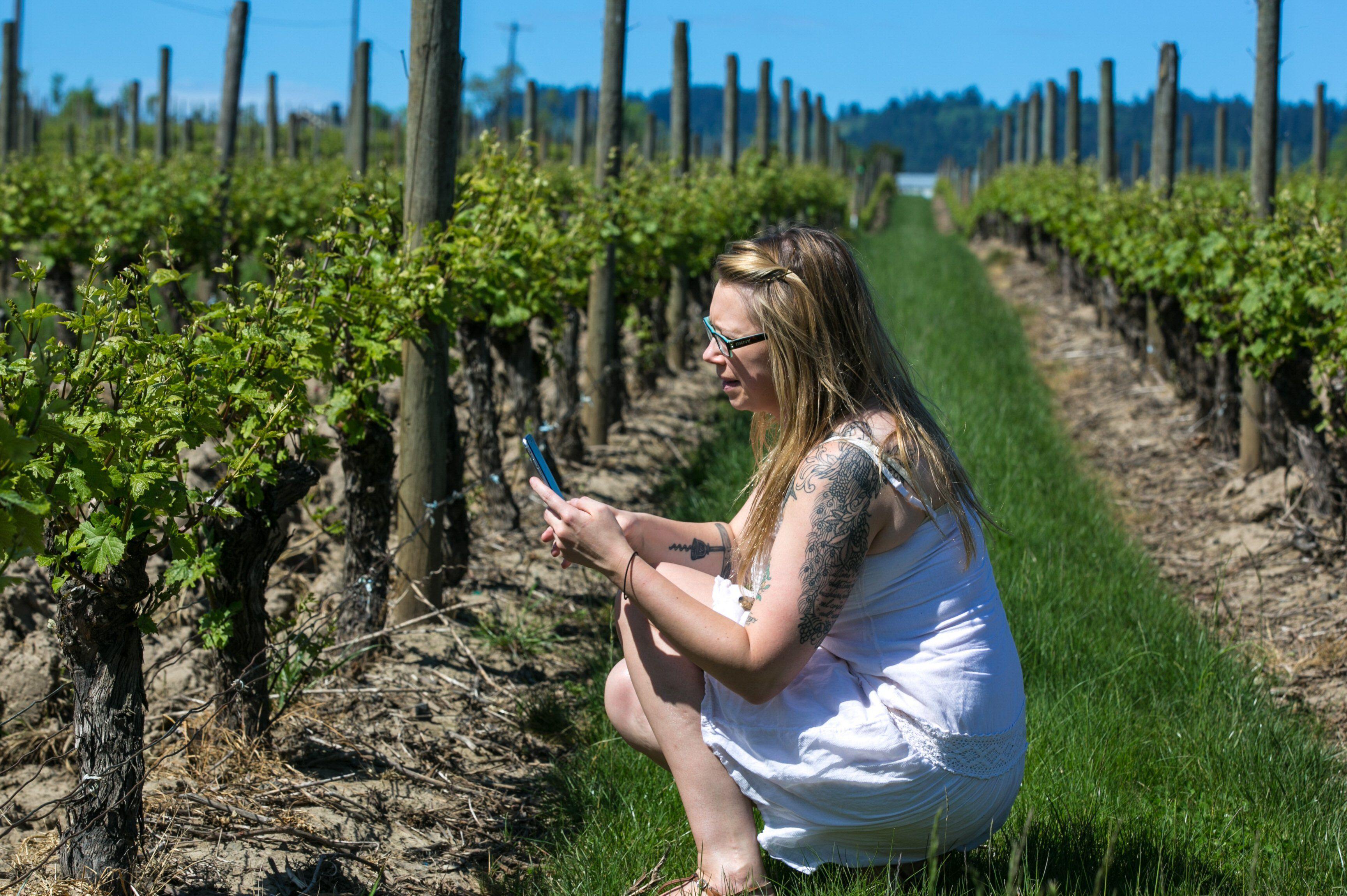 A woman photographs a grape vine at Adelsheim Vineyard
