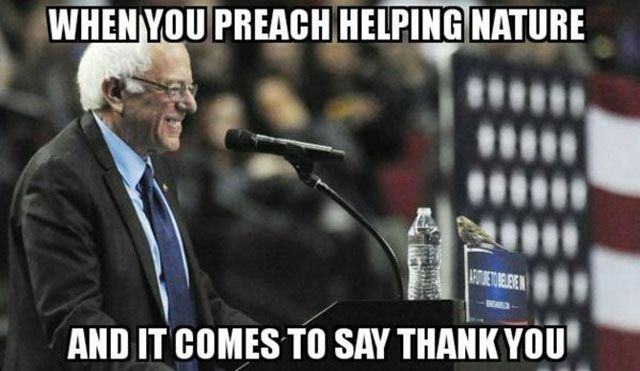 BirdieSanders Nature Comes to Say Thank You
