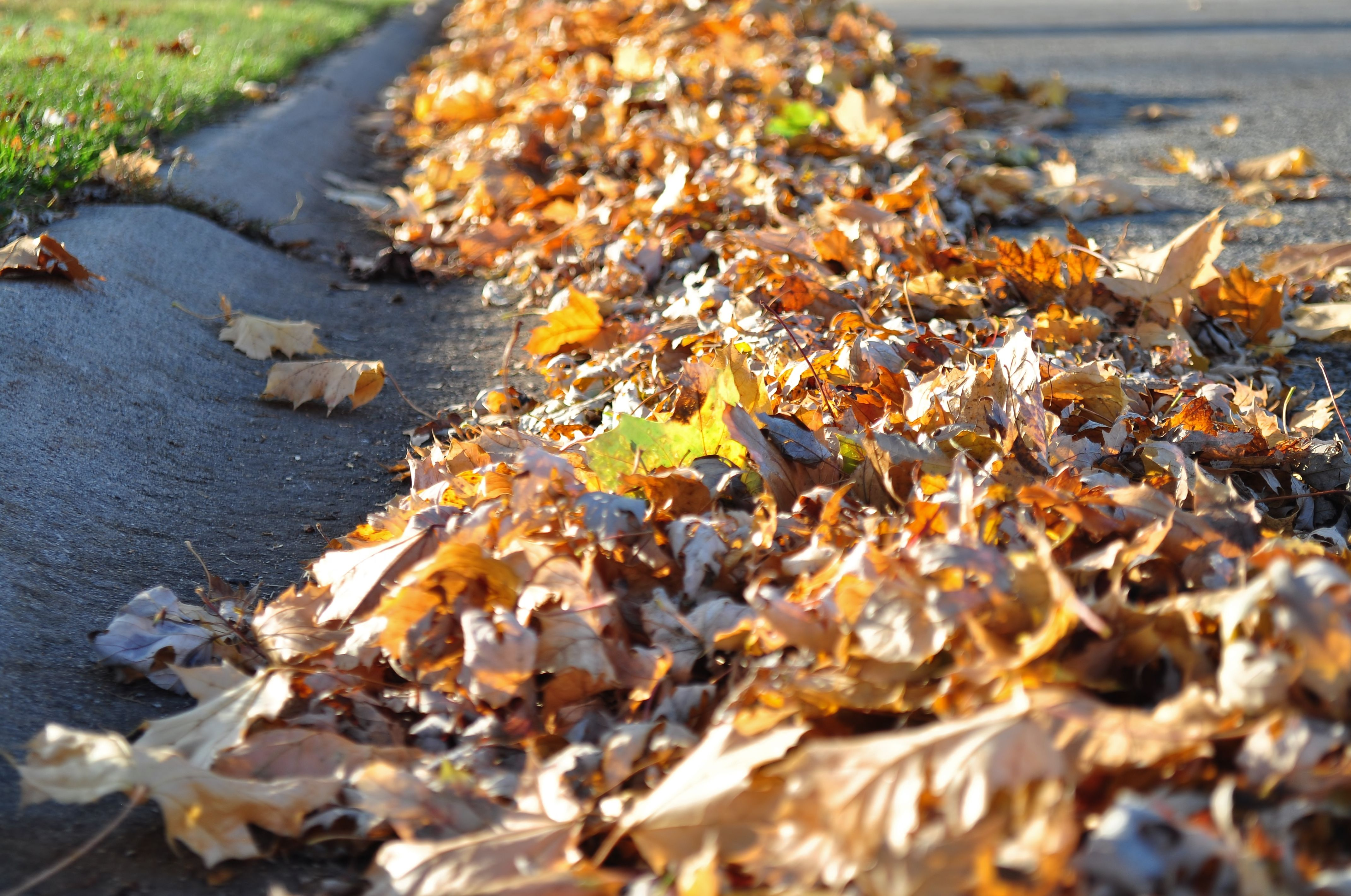 Pile of dry leaves on the street.