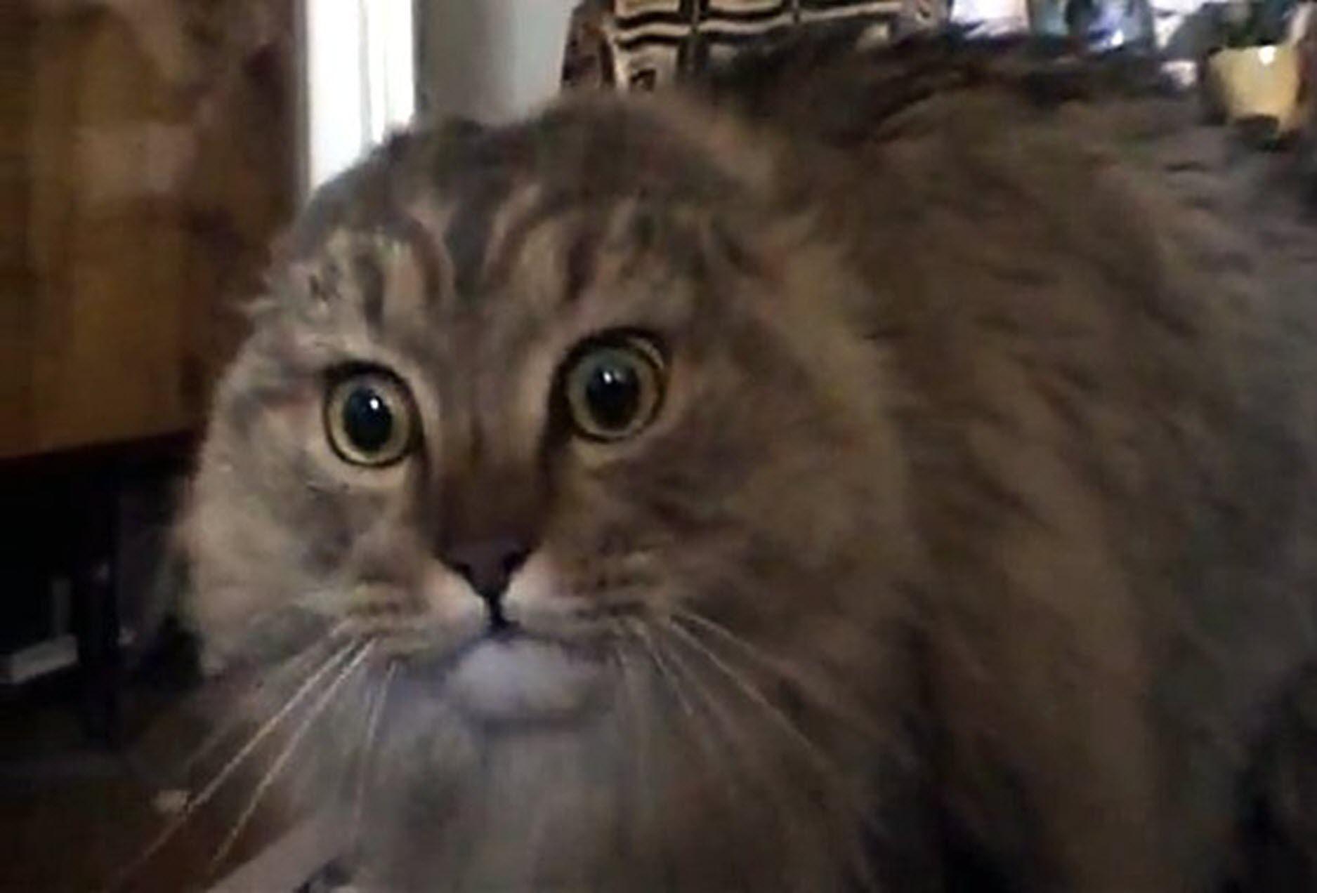 NONONO Cat viral meme
