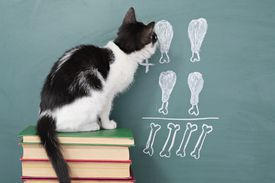 Cat sitting on stack of books in front of blackboard
