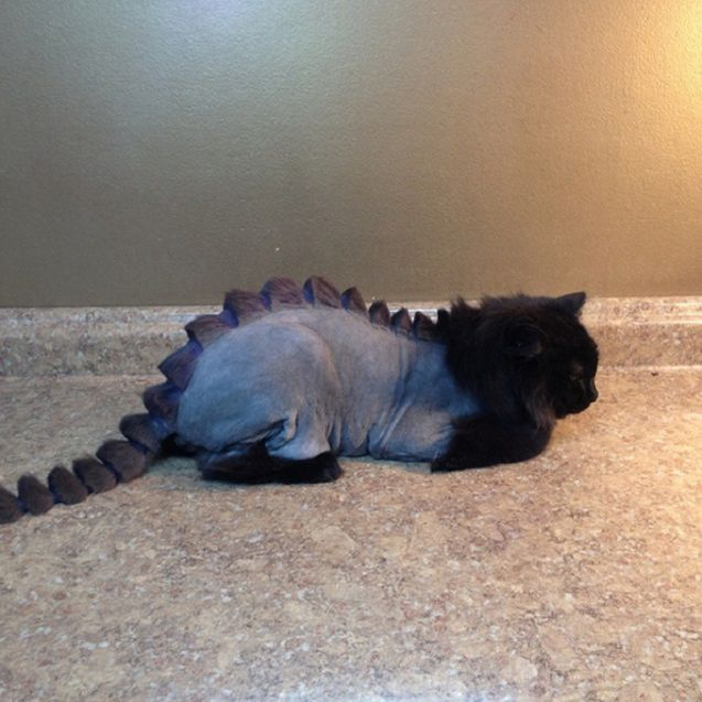 Cat with dragon haircut