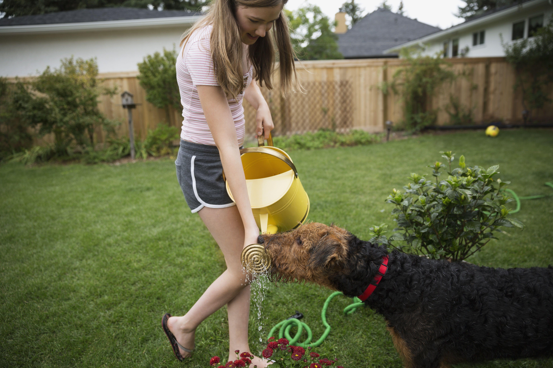 Girl watching dog drink water watering can backyard