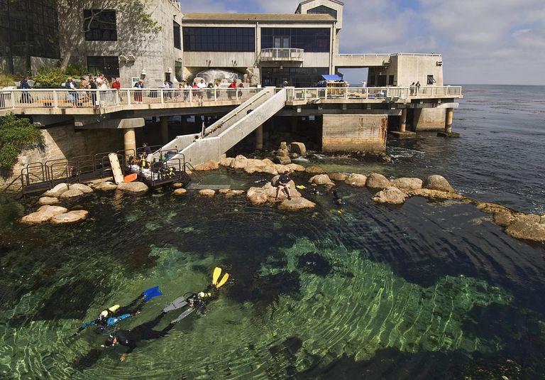 Novice divers expore man made tidal pool, Monterey Bay Aquarium