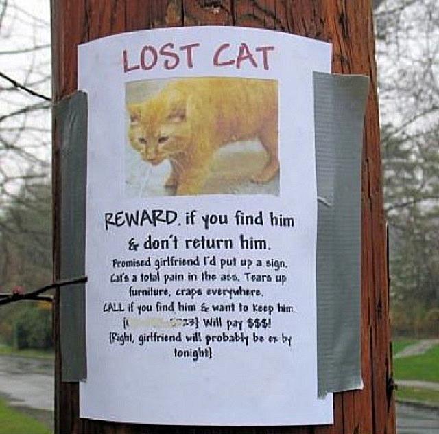 lost-cat.jpg