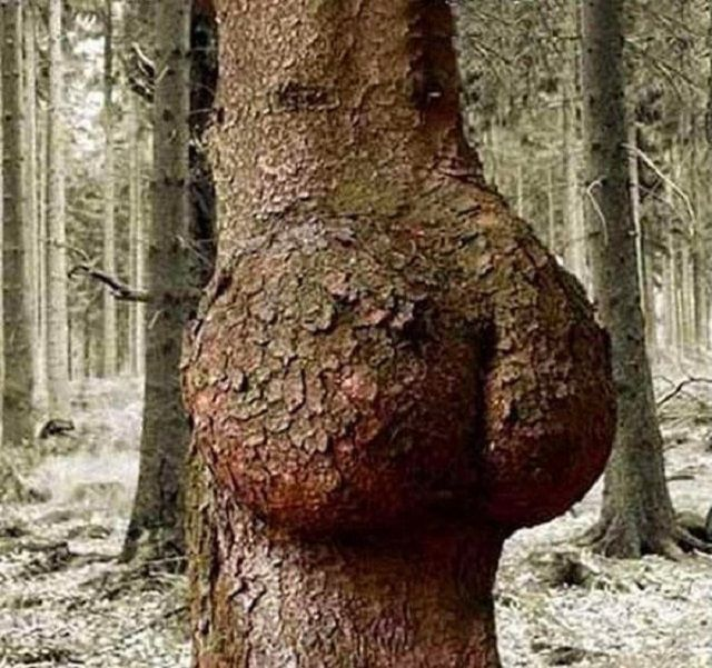 20 Naughty, All Natural Trees That Look So, So Dirty