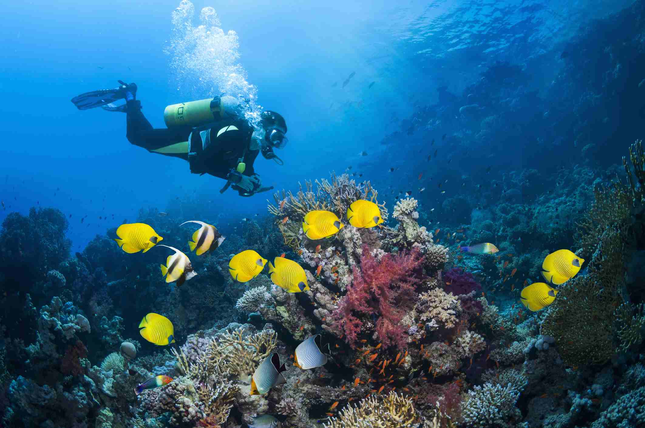 Scuba diver underwater with coral reef and brightly colored fish