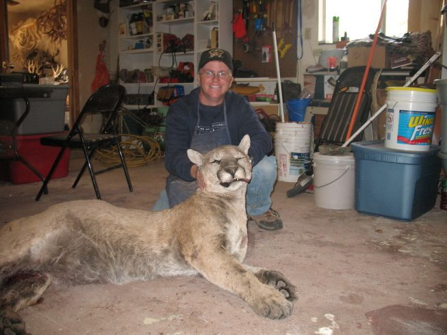 Was This Mountain Lion Killed in WV? - Urban Legends