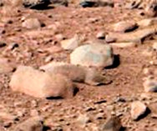 """""""Rodent"""" on Mars picture"""