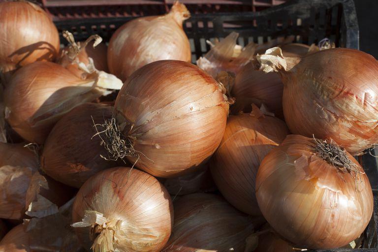 Sweet Onions