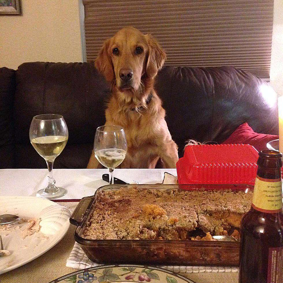 20 Funny Animals Who Think They're People