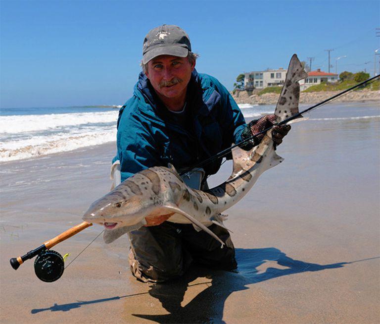 How to Catch a California Leopard Shark
