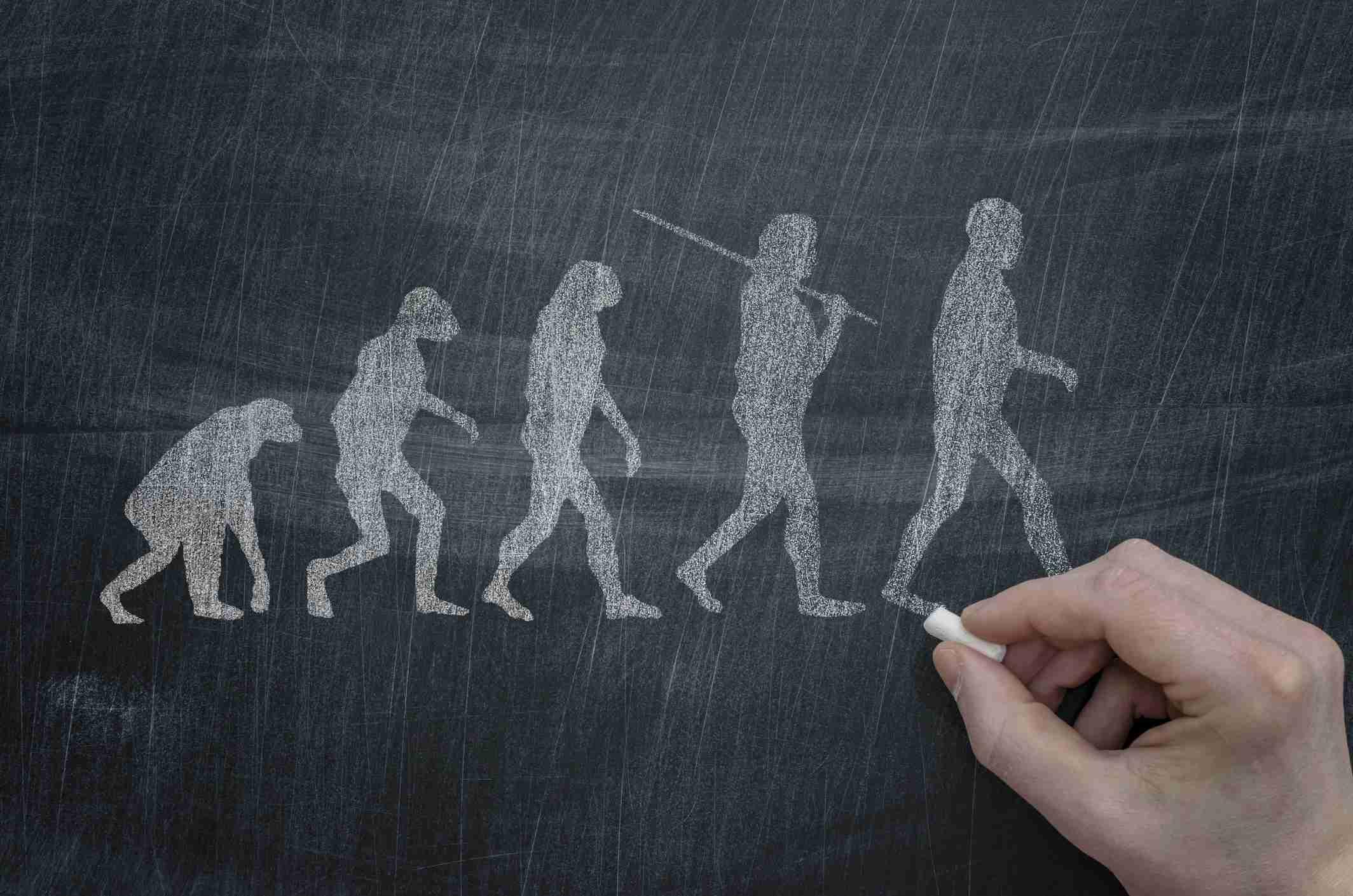 Evolution drawn with chalk